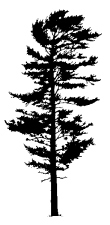 silhouette (2) (293x600)